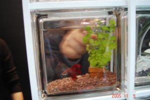 ガラスブロックに金魚