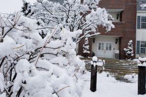岩手の雪 (1)
