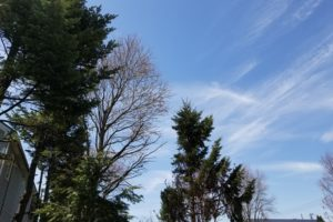 芽吹いた木