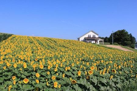 奥中山ひまわり畑の家1