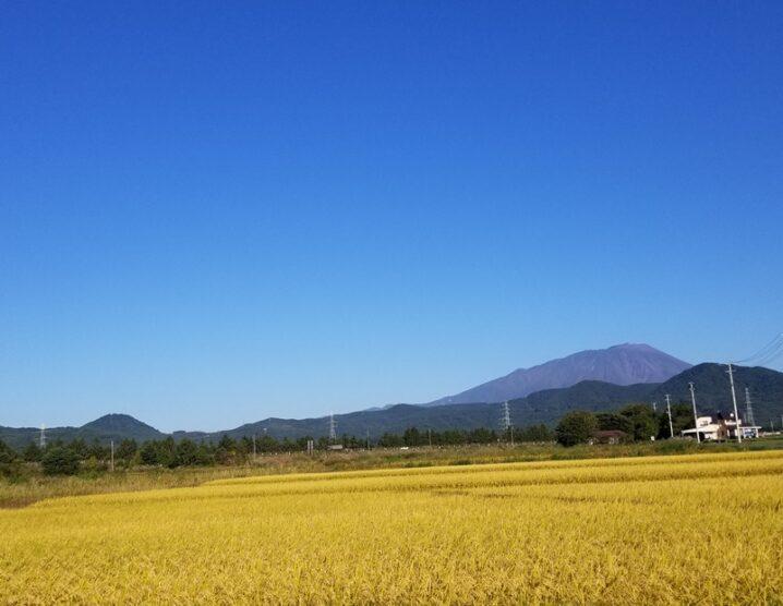 黄金色と岩手山